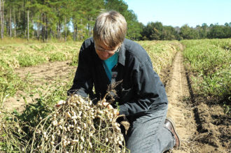 Relinda Walker overcame weed and disease pressures to produce Georgia's first ever organic peanut crop in 2007.