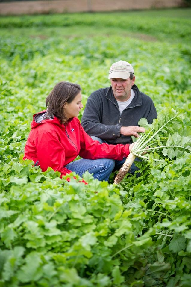 man and woman in a radish field looking at a tillage radish