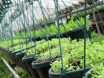 Andrea Godshalk photo