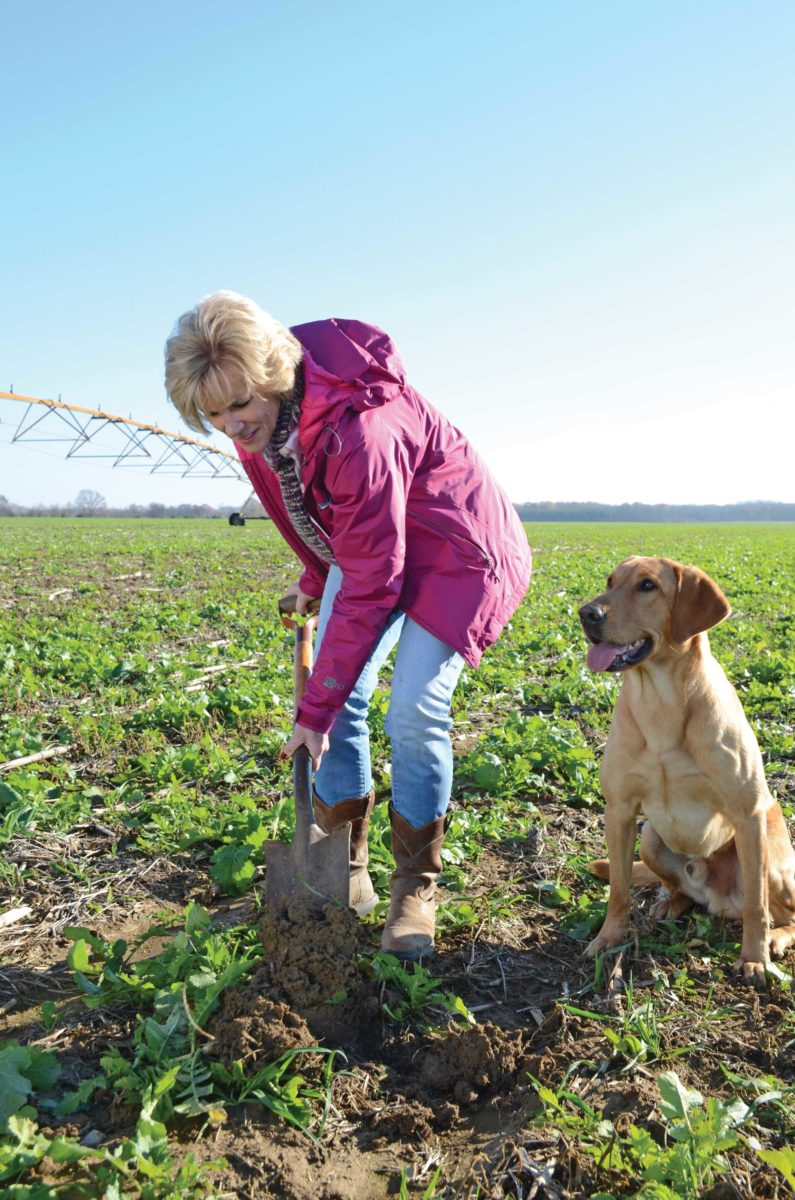Farmer digging in a field