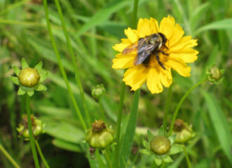 Bee pollinating a wildflower