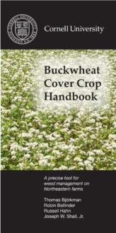 Download the Buckwheat cover crop handbook in PDF format