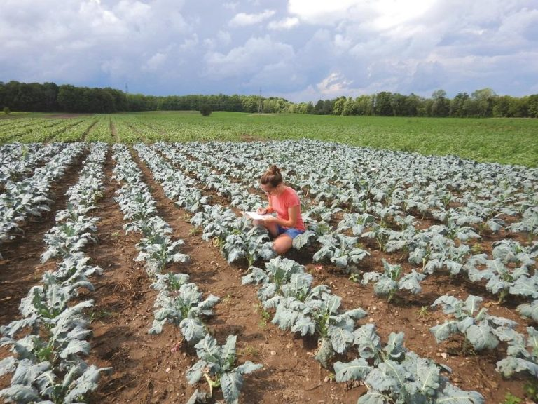 Woman taking notes in a vegetable field