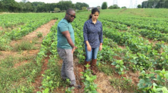 Ricardo St. Aime and Sruthi Narayanan observing cover crops in soybean stands.