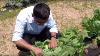 link to Integrated Pest Management in Alabama video