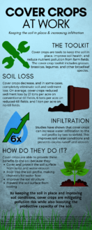 cover crops at work infographic