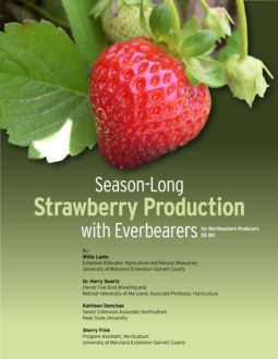 Everbearing Strawberry Guide cover