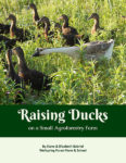 Raising Ducks guide cover
