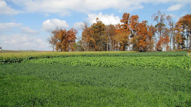 Cover Crops field trip