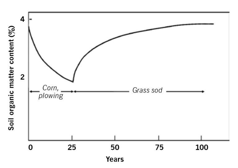 Loss and gain of soil organic matter under tilled corn followed by grass sod.