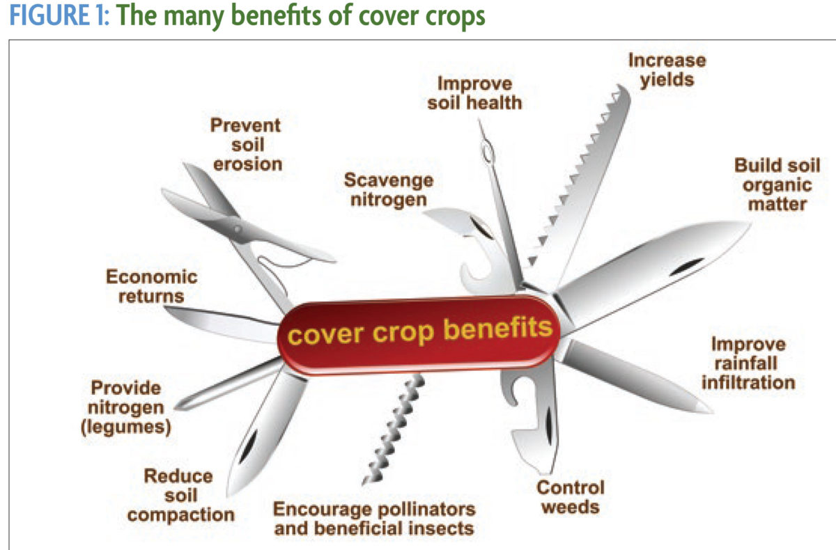Swiss army knife of cover crop benefits