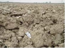 Figure 15.2. Large soil clods after tillage are indicative of compaction and poor aggregation.