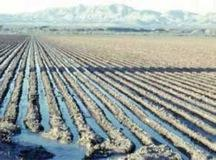 Figure 17.5. Furrow irrigation is generally inexpensive but also inefficient with respect to water use.
