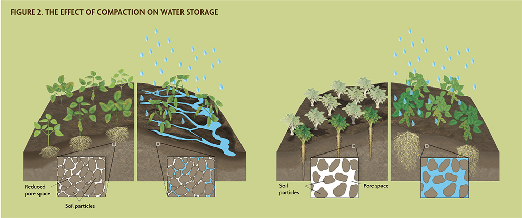 Figure 2 Effect of Compaction on Water Storage