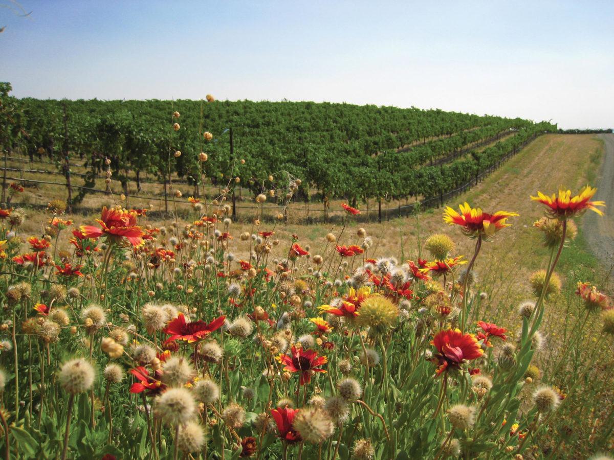 Native Habitat Vineyard