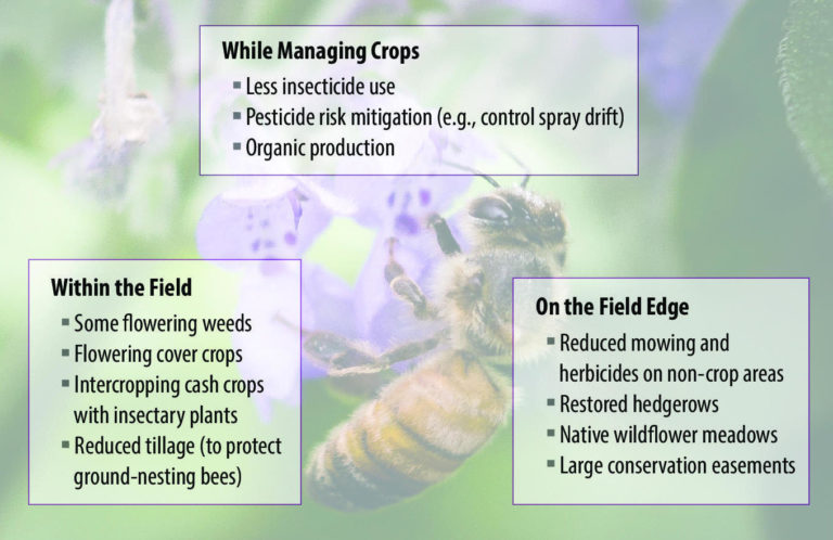 strategies to increase pollinator abundance, mange insects, insecticide, lance cheung, cover crops, organic, mowing