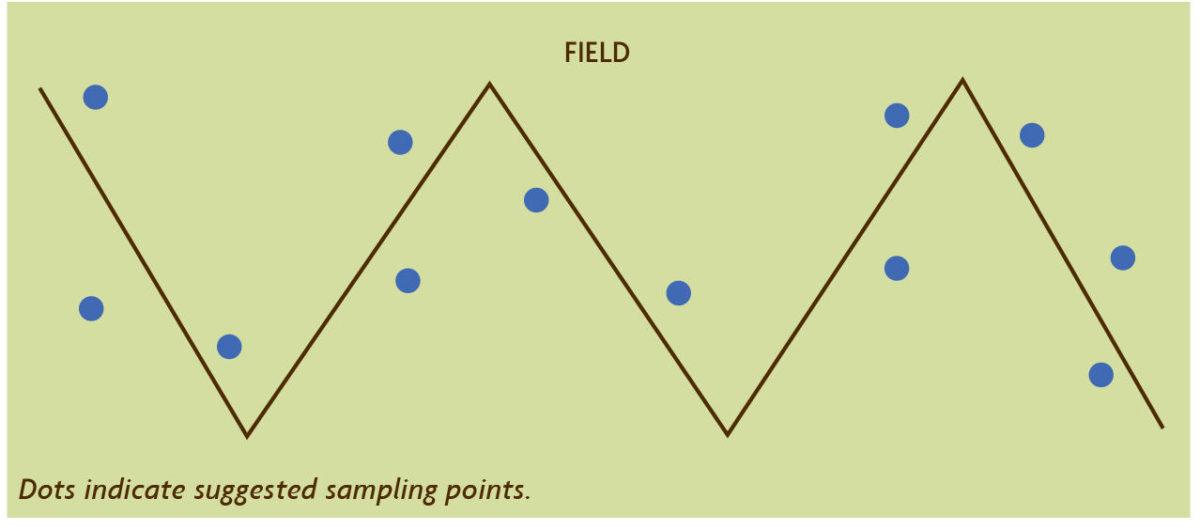 Zig Zag pattern pest monitoring