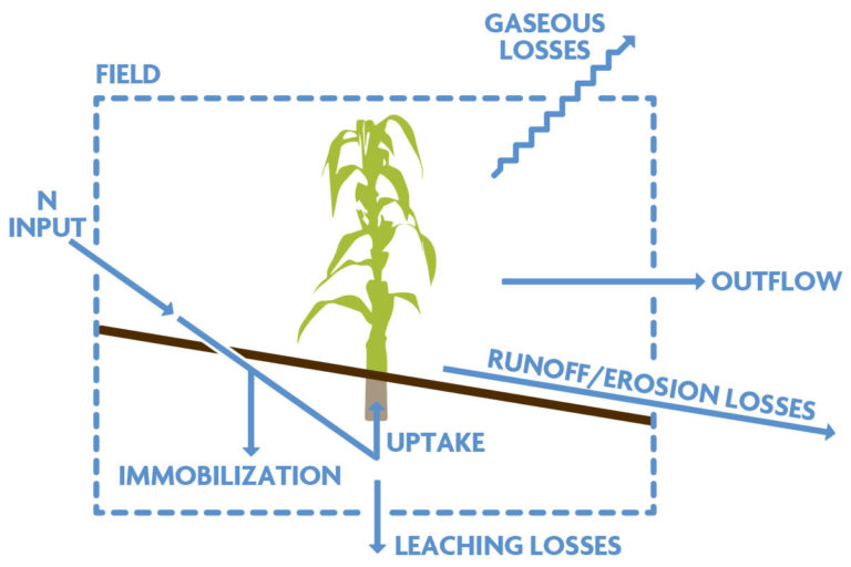 Figure 3.2C. Pathways of Nitrogen Loss and Their Impacts on Human Health and the Environment.Conceptual model showing interactions between N input and N loss processes. From Peoples et al. (2004).