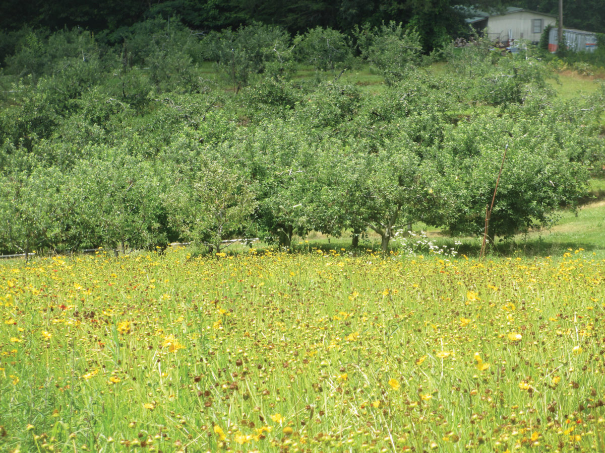 Wildflowers Apple Orchard