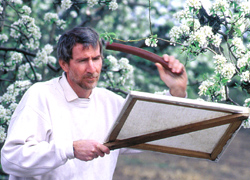 USDA ARS Researcher Dave Horton found that less frequent mowing in orchards attracts more beneficial insects to prey on pear psylla, leaf miners and other serious pests.