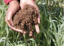 Figure 5.11. Well-aggregated soil from an organically managed field with a rye cover crop.