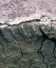 Figure 6.13. A sodic soil in Tasmania, Australia, that lacks aggregation and has problems with waterlogging when wet and with hardsetting when dry.