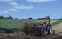 Compost, judiciously applied, can replace mineral fertilizers and feed beneficial soil organisms.