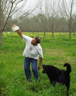 Frank Bibin of Quitman, Ga., checks a house he built in his pecan orchard to attract predatory wasps.