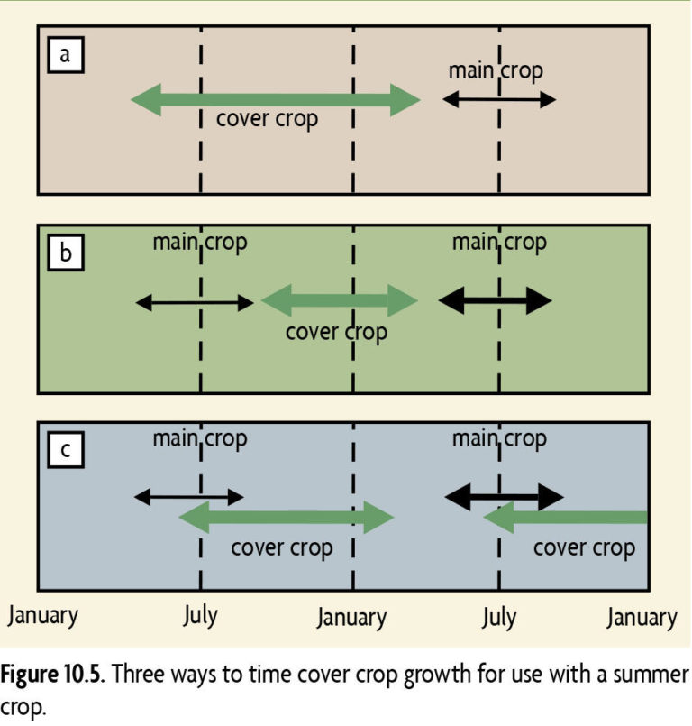 Figure 10.5 Three ways to time cover crop growth for use with a summer crop
