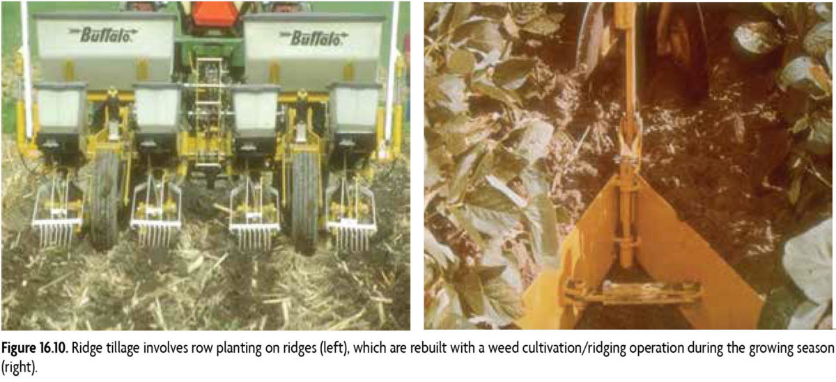 Figure 16.10 Ridge tillage involves row planting on ridges (left). which are rebuilt with a weed cultivation/ridging operation during the growing season (right)