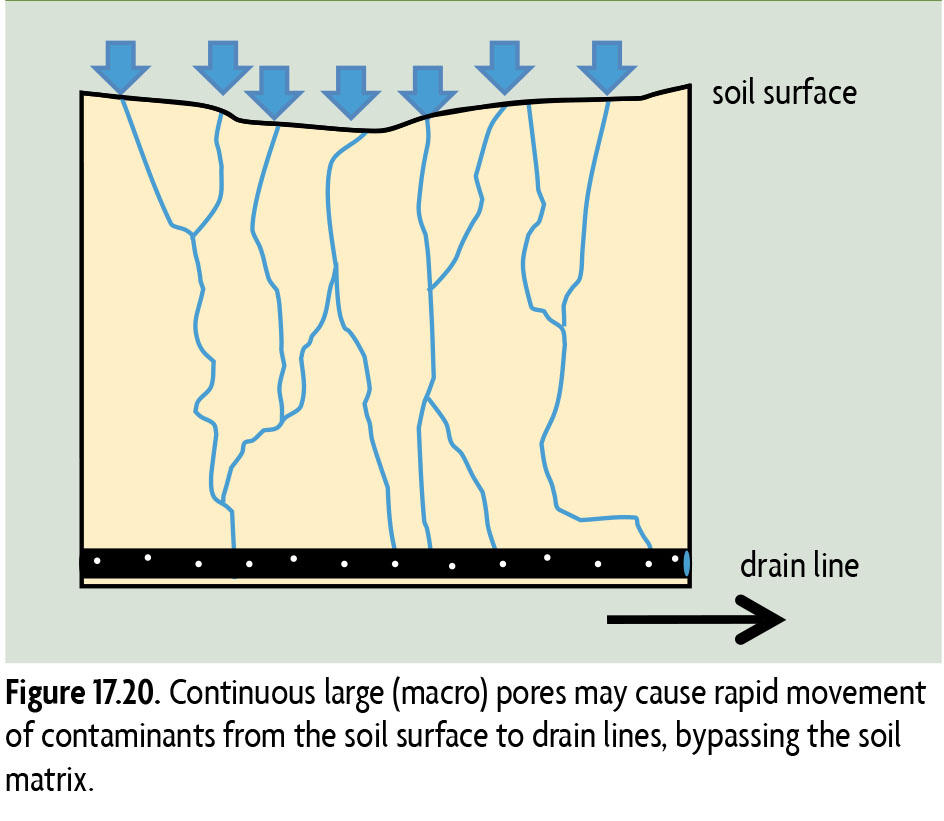 17.20 Continuous large (macro) pores may cause rapid movement of contaminants from the soil surface to drain lines, bypassing the soil matrix