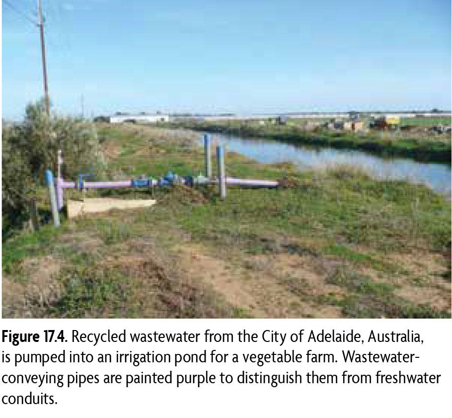 Figure 17.4 Recycled wastewater from the City of Adelaide, Australia, is pumped into an irrigation pond for a vegetable farm. Wastewater-conveying pipes are painted purple to distinguish them from freshwater conduits.