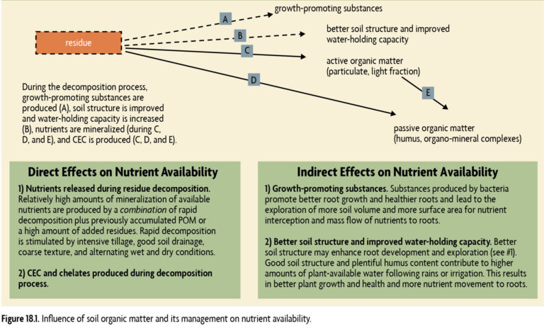Figure 18.1 Influence of soil organic matter and its management on nutrient availability.