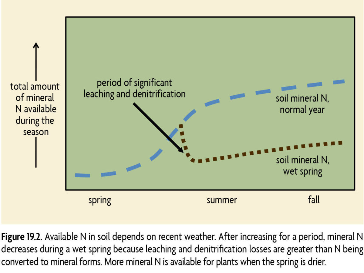Figure 19.2 Available N in soil depends on recent weather. After increasing for a period, mineral N decreases during a wet spring because leaching and denitrification losses are greater than N being converted to mineral forms. More mineral N is available for plants when the spring is drier.
