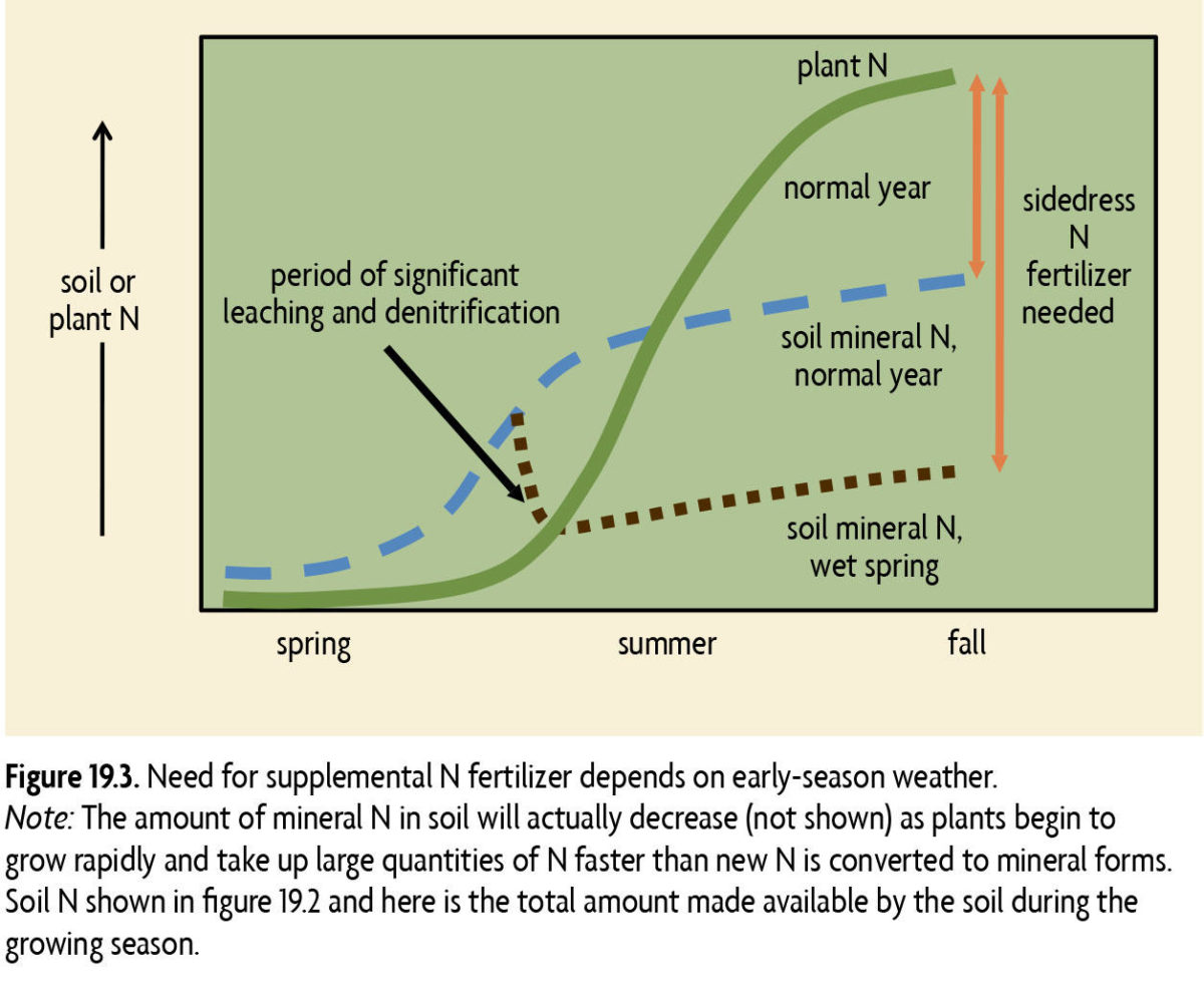 Figure 19.3 Need for supplemental N fertilizer depends on early season weather. Note: The amount of mineral N in soil will actually decrease (not shown) as plants begin to grow rapidly and take up large quantities of N faster than new N is converted to mineral forms.