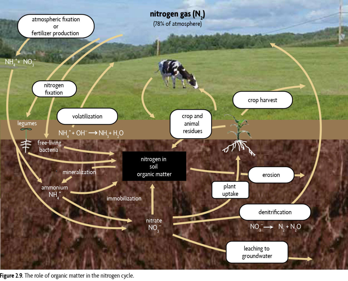 Organic matter in the nitrogen cycle