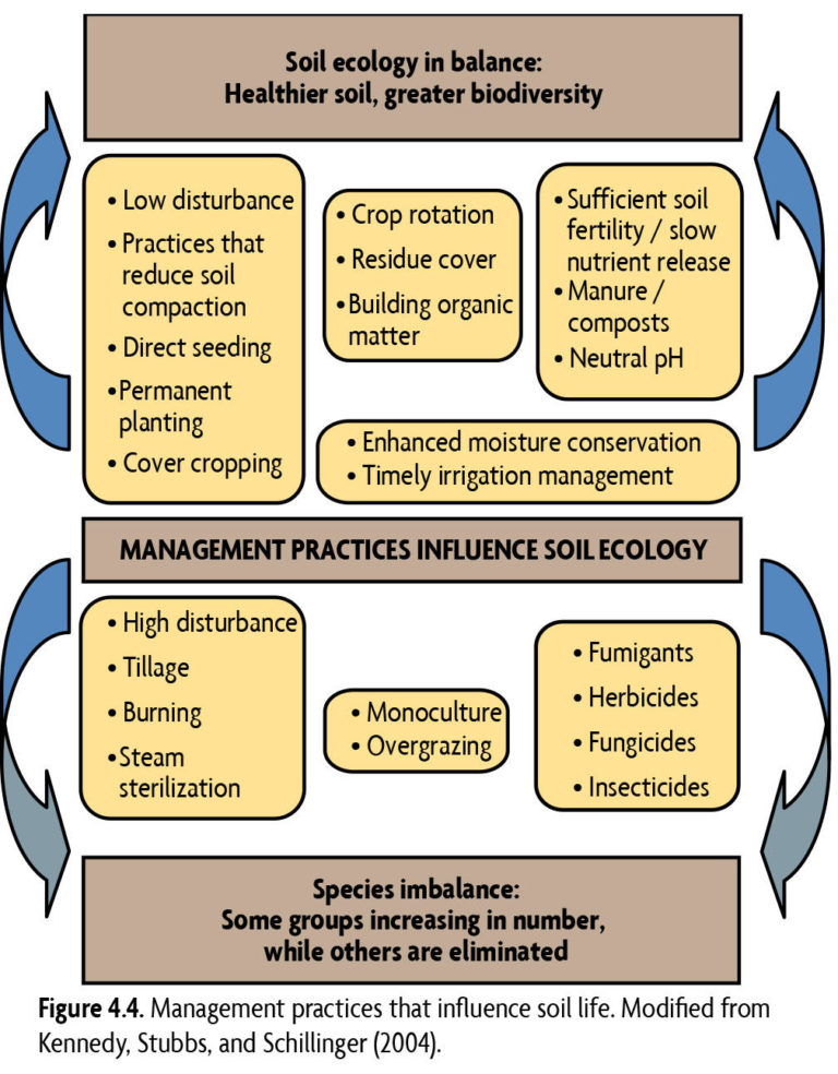 Management practices that influence soil life. Modified from Kennedy, Stubbs, and Schillinger (2004).