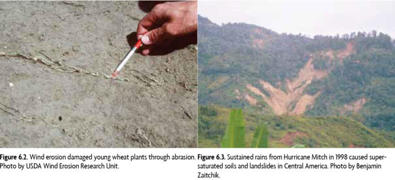 Figure 6.2 (Left): Wind erosion damaged young wheat plants through abrasion. Photo by USDA Wind Erosion Research Unit. Figure 6.3 (Right) Sustained rains from Hurricane Mitch in 1998 caused supersaturated soils and landslides in Central America. Photo by Benjamin Zaitchik.