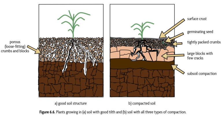 Figure 6.6 Plants growing in (a) soil with good tilth and (b) soil with al three types of compaction.
