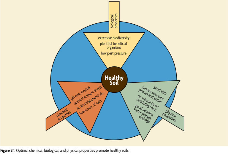 Figure 8.1 Optimal chemical, biological, and physical properties promote healthy soils