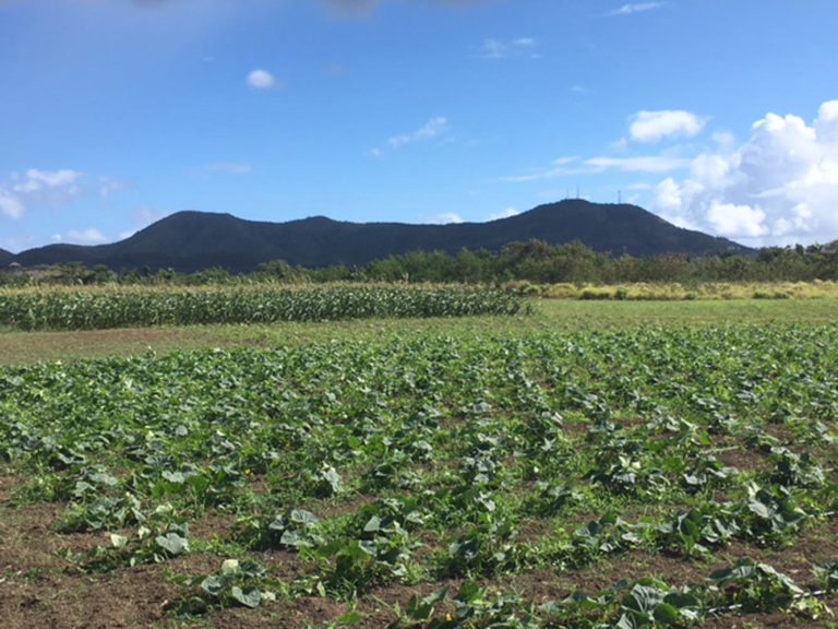 GLG Plants and Produce on St. Croix.