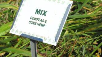Mix: Cowpeas and Sunn Hemp