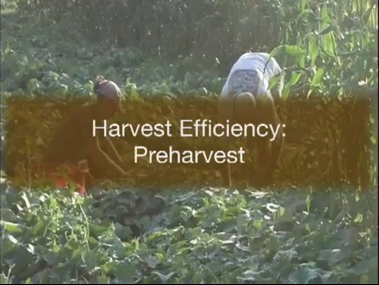 video series on effcient and safe food handling processes