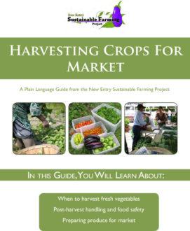guide on harvesting crop for market
