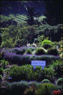 insectary, habitat, pollinators, Jerry DeWitt