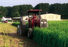 As part of his continuous soil improvement plan, North Carolina vegetable grower John Vollmer, who received a SARE producer grant, mows a cover crop of millet and soybeans to create a rich amendment.
