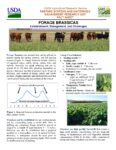 cover for forage brassicas fact sheet