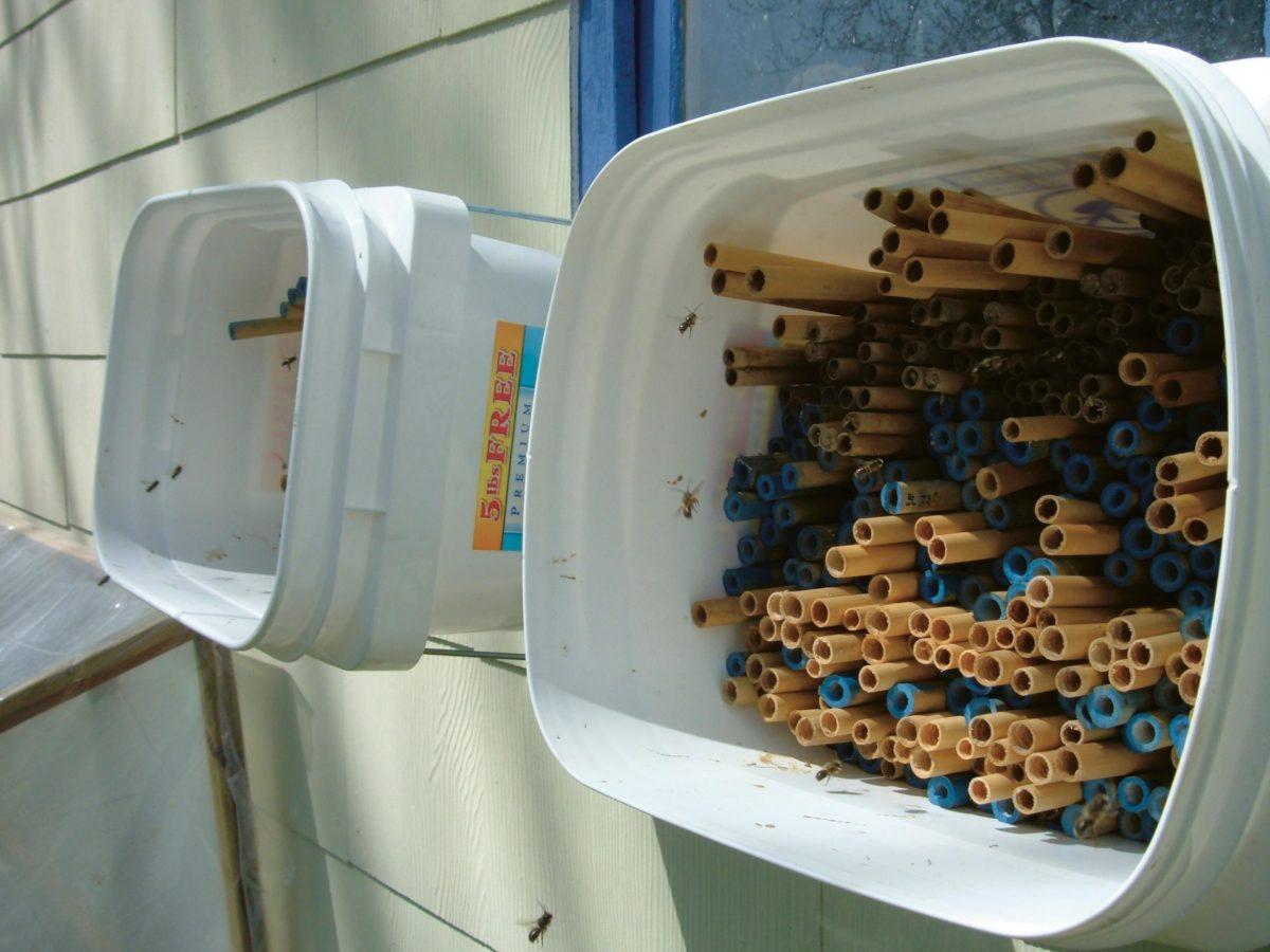 Bamboo nest tubes.