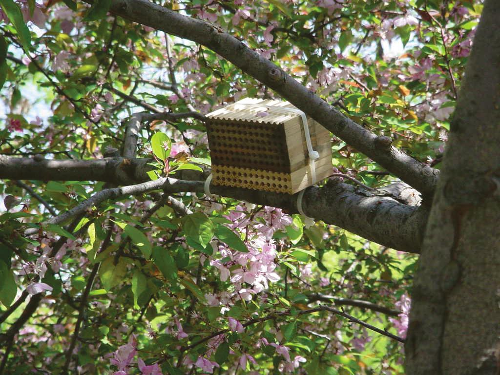 This nest consists of a series of grooved boards bound together to form a solid block.