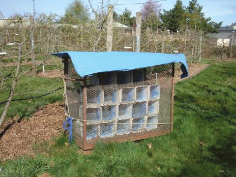 Large homemade orchard shelter containing several thousand nest tubes.
